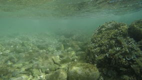 Observing rocky sea bottom stock video footage