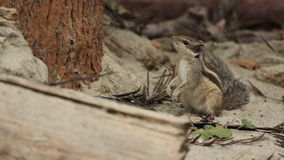 Observing squirell Stock Images