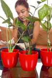 Obsessive woman taking care of plant. Surprised by what she sees Royalty Free Stock Image
