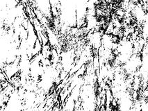 Obsolete texture of tree bark. Distressed  overlay for vintage effect. Royalty Free Stock Photo