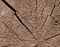 Obsolete wooden cut. Rough wooden cut texture with tree rings and cracks Stock Photography