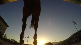 Obstáculo de salto del caballo en la puesta del sol, jinete de la silueta almacen de metraje de vídeo
