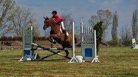 Obstáculo de salto do horseback equestre Imagem de Stock Royalty Free