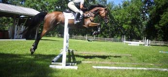 Obstáculos de salto do cavalo em um evento equestre imagens de stock