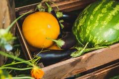 Obst- und Gemüse Auberginenmelonenwassermelone im Kasten Lizenzfreie Stockfotos