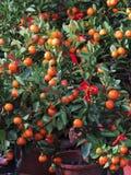 Obst und Gemüse für Feier des Chinesischen Neujahrsfests Lizenzfreie Stockbilder