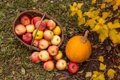 Obst und Gemüse im Garten Lizenzfreie Stockfotografie