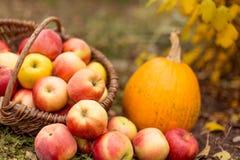Obst und Gemüse im Garten Stockbild
