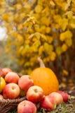 Obst und Gemüse im Garten Stockbilder