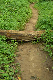Obstacle on a path Royalty Free Stock Photography