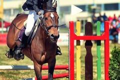 Obstacle sautant de cheval Photo libre de droits