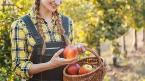 Obstbauerfrau, die Äpfel in ihrem Korb erntet lizenzfreies stockbild