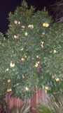 Obstbaum Stockbilder