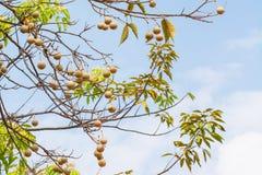 Obstbaum und Himmelhintergrund stockfotografie