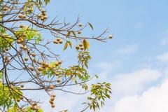 Obstbaum und Himmelhintergrund stockbilder