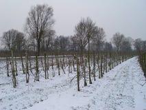 Obstbaumplantage im Winter, Schnee, Nebel, andere Bäume im backgrounde stockbild