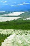 Obstgärten in Italien Lizenzfreie Stockfotografie