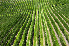 Obstgarten lizenzfreies stockfoto