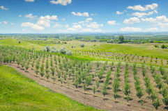 Obstgarten, Ackerland und blauer Himmel Lizenzfreie Stockbilder