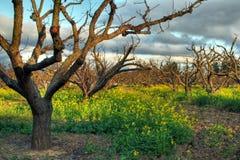 Obstgarten im Frühjahr Stockbilder