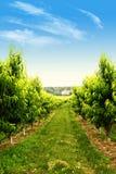 Obstgarten im Frühjahr Lizenzfreies Stockbild