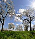 Obstgarten im Früjahr Stockbilder