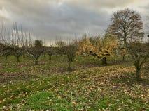 Obstgarten im Herbst Stockfotos