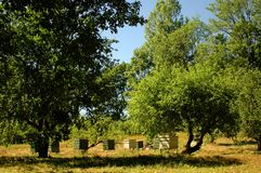 Obstgarten mit Bienenstock 0581 Stockbilder