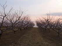 Obstgarten am Sonnenuntergang Lizenzfreies Stockfoto