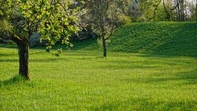 Obstgarten und Wiese in der Sommerzeit stockfotografie