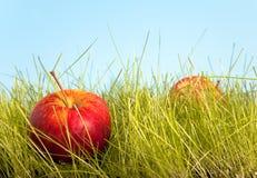 Obstgartenapfel Stockbilder