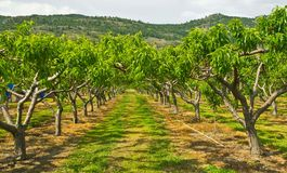 Obstgartenbäume Stockbild