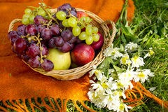 Obstkorb und Blumenstrauß von Gänseblümchen auf Plaid Lizenzfreie Stockbilder