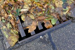 Obstructed sieve,  wet leaves on the roadside. Danger due to plugged sieve, wet leaves at the edge of the road Stock Image