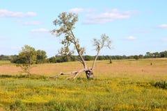 obszarów trawiasty Illinois nachusa Zdjęcie Royalty Free