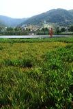 obszarów trawiasty szwajcara wioska Zdjęcie Royalty Free