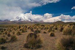 obszarów trawiasty wulkany Obraz Royalty Free