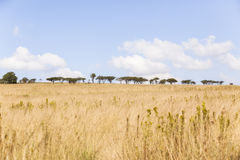 Obszarów trawiastych drzew krajobraz Obrazy Royalty Free