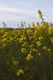 Obszarów trawiastych wildflowers przy Montezuma obywatela rezerwatem dzikiej przyrody Obrazy Stock