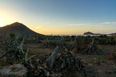 obszarów wiejskich andalusian farmy drzew oliwnych widok Zdjęcie Royalty Free
