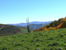 obszarów wiejskich jesienni drzewa Obrazy Stock