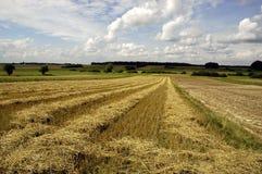 obszarów wiejskich kukurydziany pole Obrazy Stock