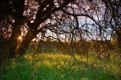 obszarów wiejskich wiosna Obraz Royalty Free