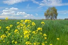 obszarów wiejskich wiosna Obraz Stock