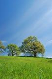 obszarów wiejskich wiosna Obrazy Stock