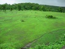 obszarów wiejskich zielone pola Obrazy Royalty Free