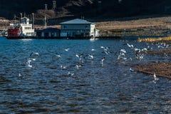 obszar krajowych jeziora rekreacja miodu Zdjęcia Royalty Free