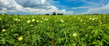 obszar rolnictwa fotografia stock