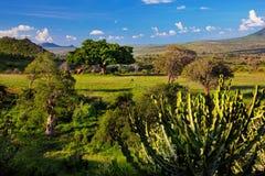 Obszar trawiasty, krzak i sawanna krajobraz. Tsavo Zachodni, Kenja, Afryka zdjęcia stock
