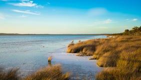 Obszar trawiasty obok jeziora Zdjęcia Royalty Free